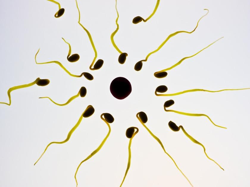 sperm-956481_1920